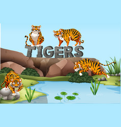 wild tigers by the pond vector image