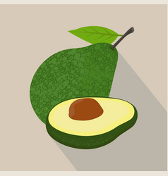 avocado isolated flat style vector image