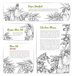 Olive oil market sketch banners or posters vector