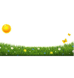 Green grass border with flowers and sun isolated vector