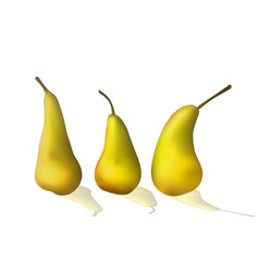 set of bright yellow pears vector image