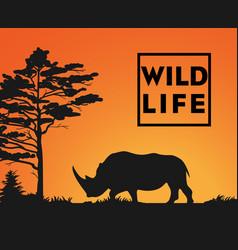 wild life vector image