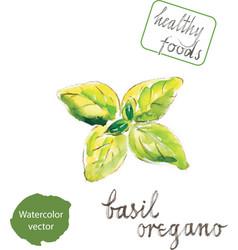 watercolor green basil vector image vector image