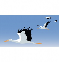 storks vector image vector image