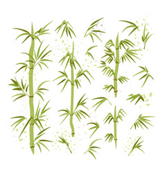 Bamboo leaves stems vector