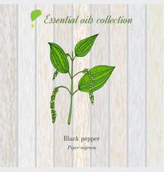 black pepper essential oil label aromatic plant vector image