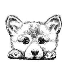corgi puppy dog vector image