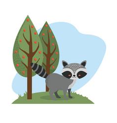 Cute raccoon animal to natural wildlife vector