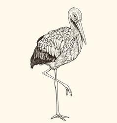Hand drawn white stork vector