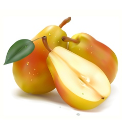 juicy pear vector image