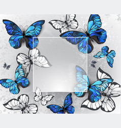 square banner with blue butterflies vector image
