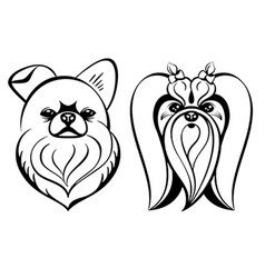 Maltese dogs vector image vector image