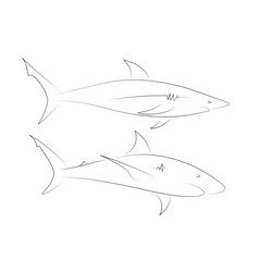 black line sharks on white background vector image