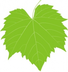 grape leaf low detail vector image