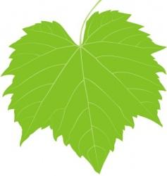 grape leaf low detail vector image