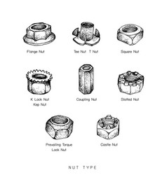Hand drawn sketch set of nuts type vector