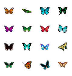 set of butterfly realistic symbols with lexias vector image