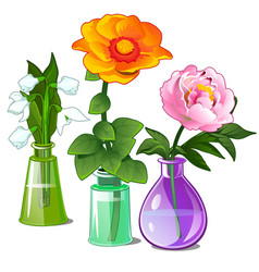 Snowdrop peonies and zinnias in glass vases vector