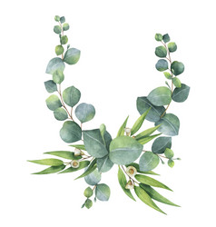 watercolor bouquet with green eucalyptus vector image