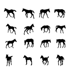 set of silhouettes of foals vector image vector image