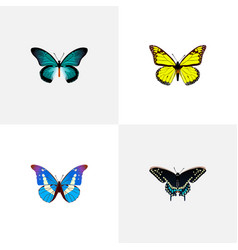 Realistic morpho hecuba archippus bluewing and vector