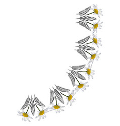 A frame daisy flowers on white background vector