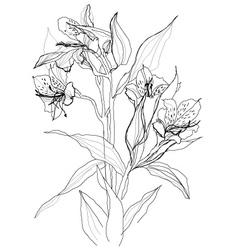 alstrameriya flower vector image