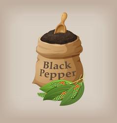 Black pepper in the bag vector