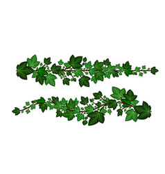 ivy leaves branches set green ivy garlands vector image