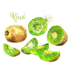 Watercolor Kiwi Fruit and his Sliced Segments vector