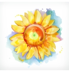 Watercolor painting sunflower vector image vector image