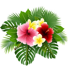 beautiful flowers and leaves vector image