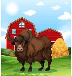 Buffalo standing in farmyard vector
