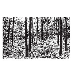 Grove black-locust trees vintage vector