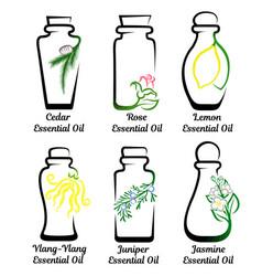 Set essential oils vector