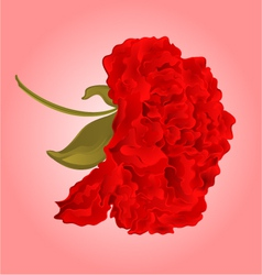 Red hibiscus blossom simple tropics flower vector image