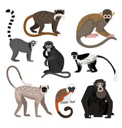 Different monkey set vector