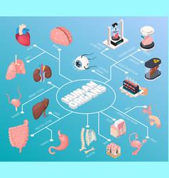 human organs isometric flowchart vector image