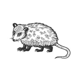 Opossum animal sketch engraving vector