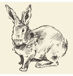 Rabbit engraving style vintage hand drawn sketch vector image