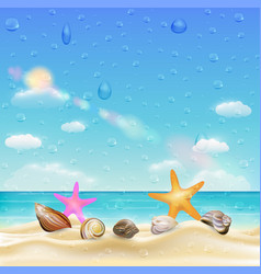 sea shell and starfish on a sand beach vector image