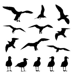 Seagulls silhouettes on a white isolated vector
