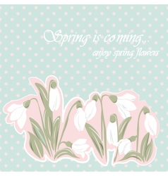 Snowdrop flowers Blossom spring card vector image vector image