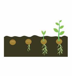 plants growing in soil vector image