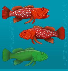 common harlequin fish vector image