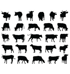 black silhouettes cows vector image