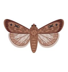 Cartoon exotic moth vector