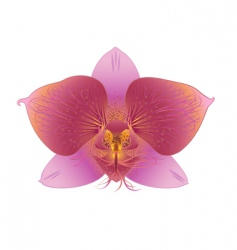 Refined orchid vector