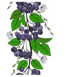Seamless ornament of black ashberry branch of vector