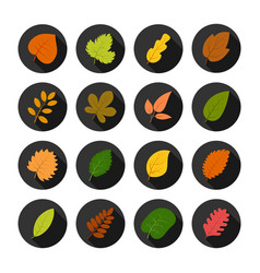 set of sixteen autumn leaves in circles vector image